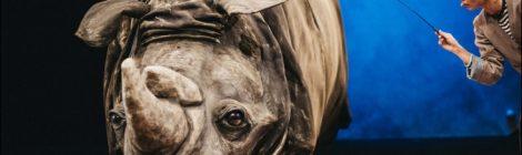 Nosorożec ma najgorzej (Kto pocieszy pechowego Nosorożca?)